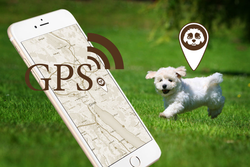 Cavachon Starterkit GPS iPhone6 plus